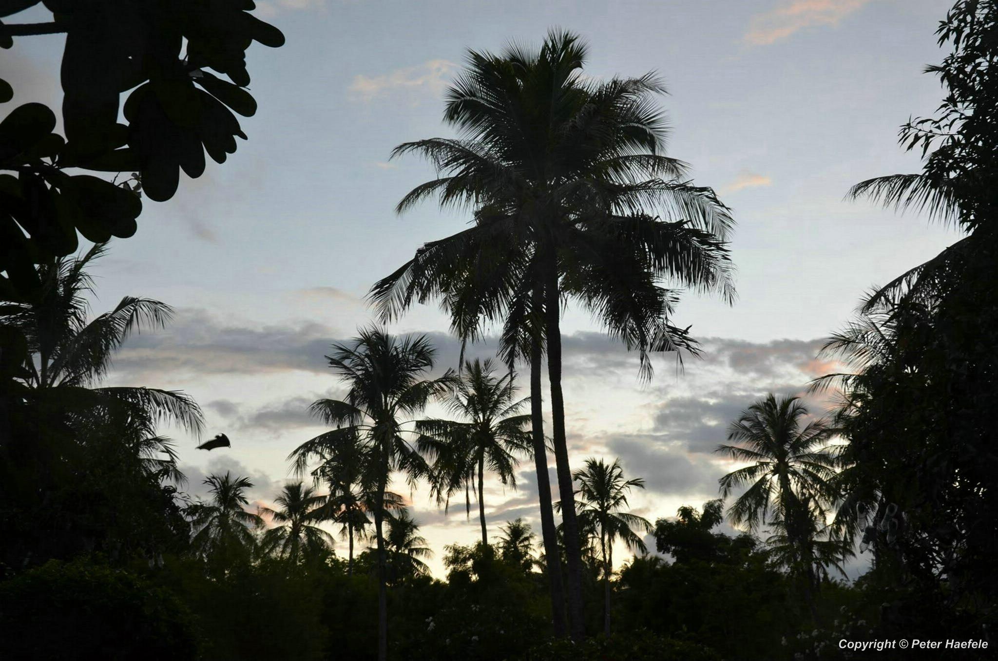 Abendstimmung ueber Nalaguraidhoo (Sun Island) mit Maledivischen Flughund.