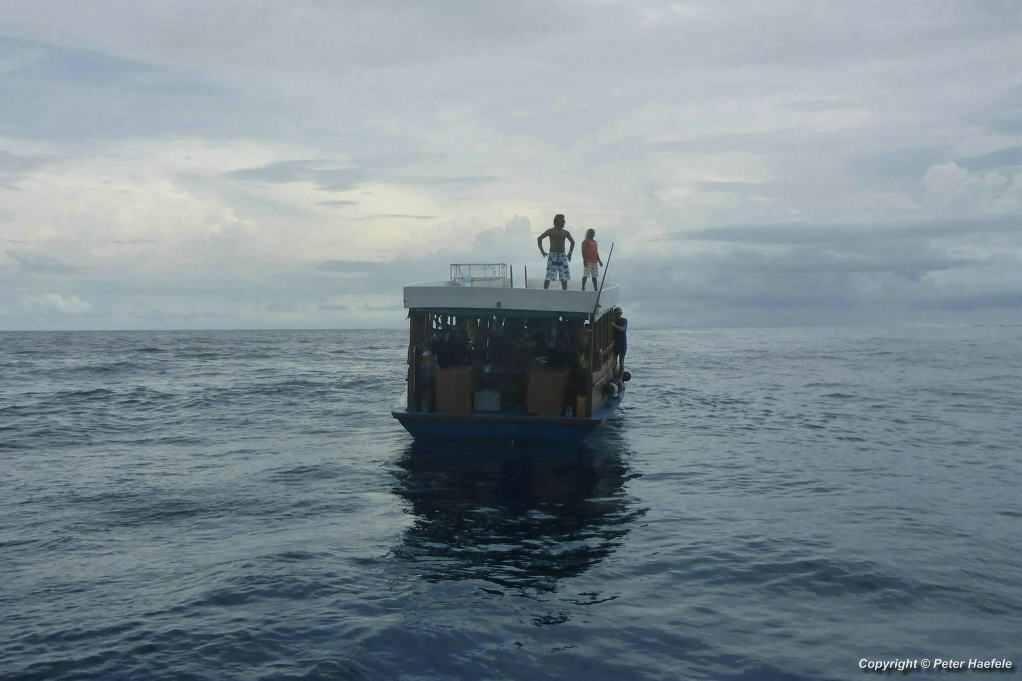Eine weitere Walhai Exkursion vor Maamigili